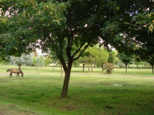 imagenes2010 75